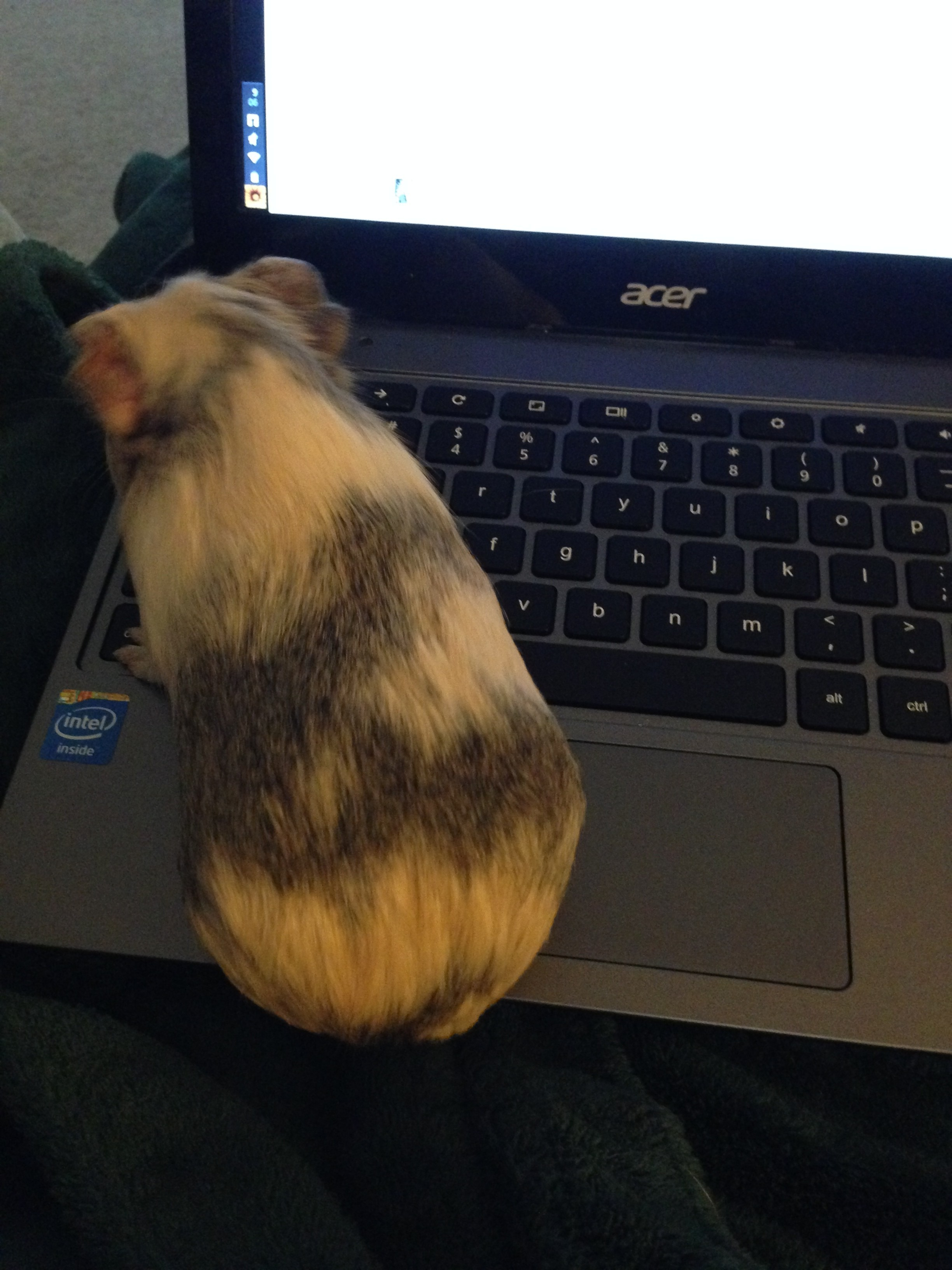 Piglet Helping Blog